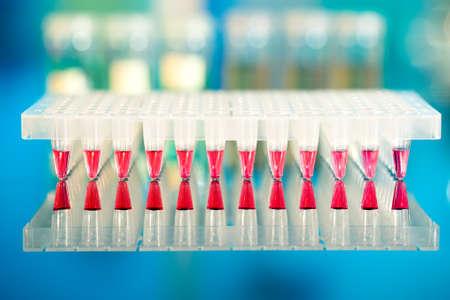 amplification: Les outils pour l'amplification par PCR de l'ADN: plaque de 96 puits Banque d'images