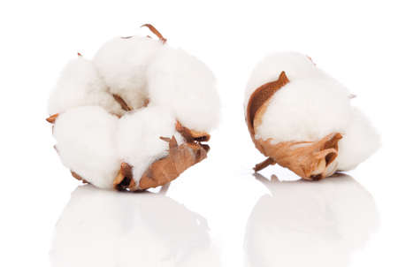 Usine de coton doux avec une réflexion Banque d'images - 27996608