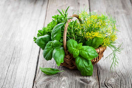 freshly picked: Basket of freshly picked herbs including basil, rosemary, dill and parsley.  on wooden background