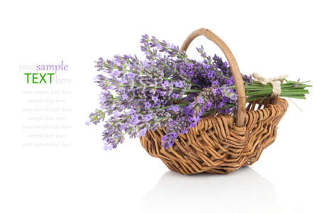 lavender bushes: Basket with a lavender, isolated on white background Stock Photo