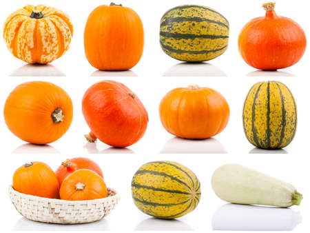 set of colorful pumpkins on white background photo