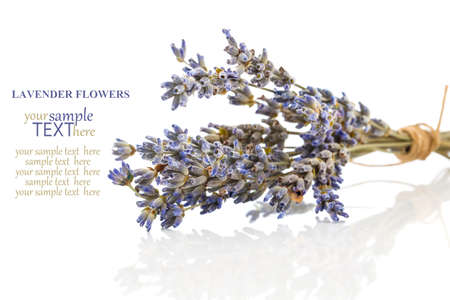 dry lavender flower, isolated on white background photo
