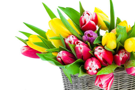 bulb tulip: Colorful tulip blooms in a basket isolated on white