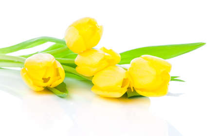 bulb tulip: Bouquet of yellow tulips, isolated on white background