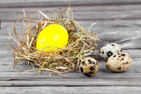 huevos de codorniz: Huevo de Pascua en los nidos y huevos de codorniz sobre fondo de madera