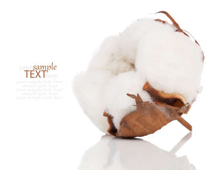 Cotton soft plant with reflection
