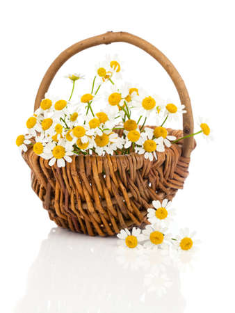 beautiful camomile flowers in basket, isolated on white photo