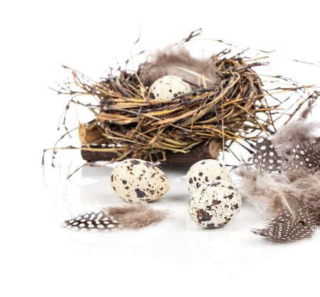 quail eggs on white background photo