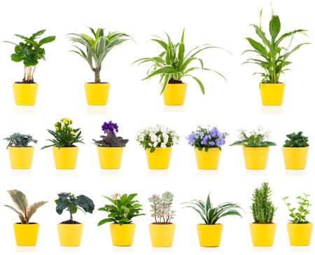 set of green house plant, isolated on white background photo