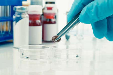 pinzas: Investigación de las garrapatas Ixodes ricinus