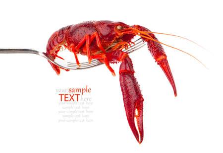 cancers: crawfish on fork isolated on white background