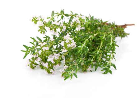 tomillo: tomillo hierbas frescas aisladas sobre fondo blanco