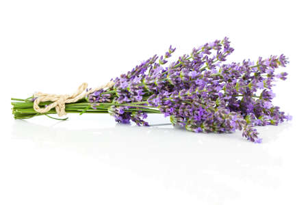 bosje lavendel bloemen op een witte achtergrond Stockfoto