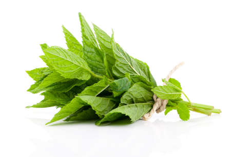 Bundle of fresh spearmint isolated on white