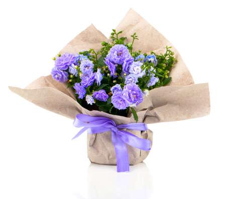 紙包装、白い背景で隔離の青いホタルブクロ テリー花