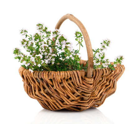 Bundle of fresh Thyme in a wicker basket, on a white background