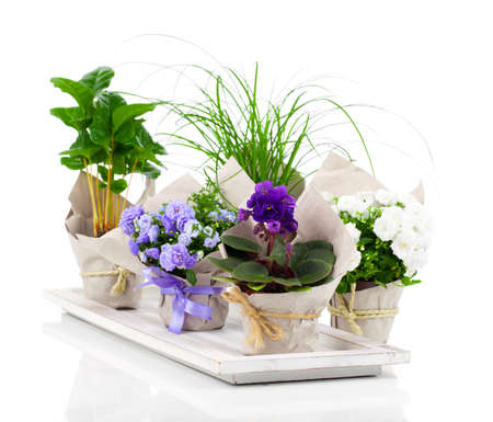 Potted plants: spring flowers and plants, isolated on white background