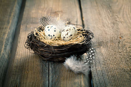 quail: quail eggs in nest on wooden background