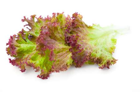 one piece: Lettuce. Salad leaves isolated on white background