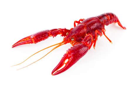 cancers: crawfish isolated on white background Stock Photo
