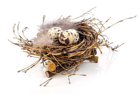 quail nest: quail eggs in birds nest isolated on white background