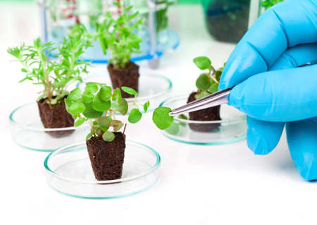 biotechnology: image showing a persons hands in blue rubber glove holding a small leafy plant with tweezers next tn the laboratory