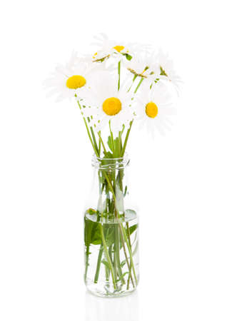 marguerite: bouquet of daisies on a white background