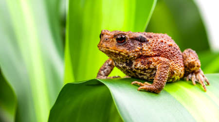 Common ground toad sitting on green plant