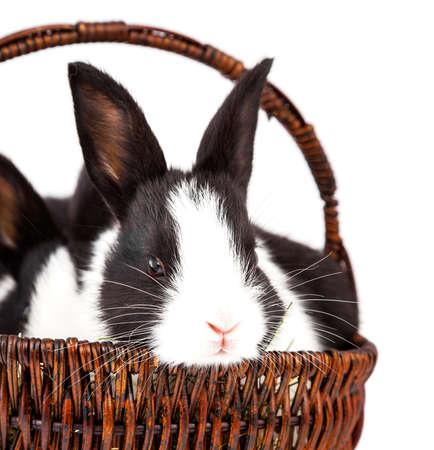 白い背景の上のバスケットにウサギ
