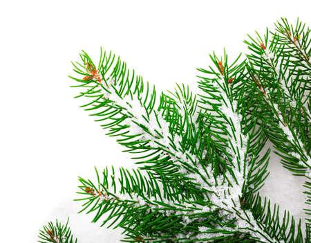 雪のクリスマス ツリーの緑の枝 写真素材