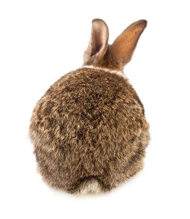 白い背景にウサギ 写真素材