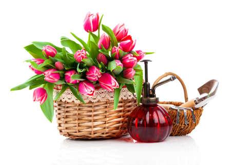 白い背景のバスケットに赤いチューリップの花
