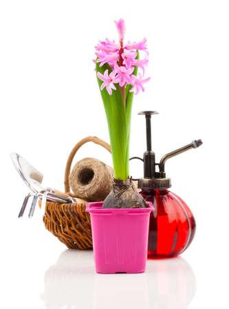 白い背景に苗のための庭のツールを持つヒヤシンスの花