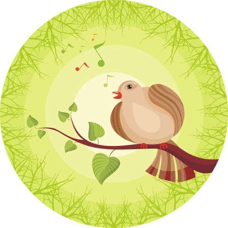 usignolo: uccello
