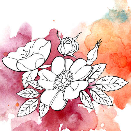 The rose pattern and wild rose in watercolor, handmade. Isolated black and white silhouettes on a colored watercolor spot. Can be used as background for web pages, wedding invitations, greeting cards, fabric design, Wallpaper, paintings, packing design and so on. Stock Photo