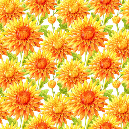 Watercolor hand painted chrysanthemum. Can be used as background for web pages, wedding invitations, greeting cards, textile design, wallpapers, patterns, package design 版權商用圖片