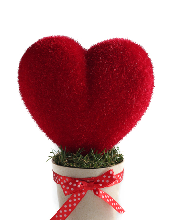 pretty s shiny: Red heart in pot for valentines day white background
