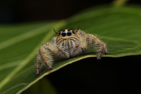arthropod: close up front to Spiders in the forest with selective focus