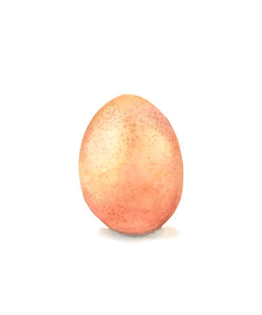 chicken egg on a white background watercolor drawing
