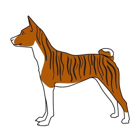 brindle: Brindle basenji dog standing Illustration