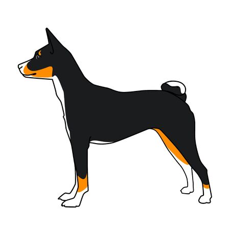 pedigreed: dog basenji breed, tricolor Illustration