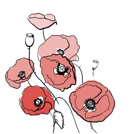 sketch: Sketch of poppy Flower