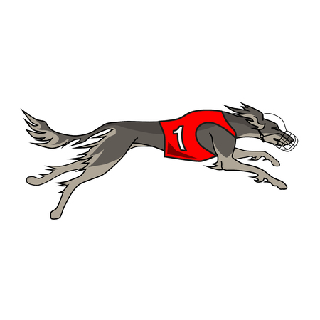 borzoi: Running dog saluki breed, in dog racing or coursing dress number one Illustration