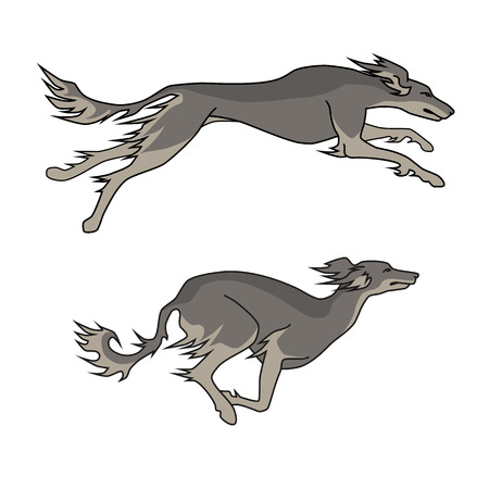 borzoi: Color vector image of running dogs saluki breed, two poses
