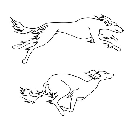 borzoi: Contour vector image of running dogs saluki breed, two poses