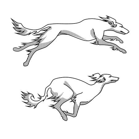 Contour vector afbeelding van het runnen van honden saluki ras, twee poses, met schaduwen