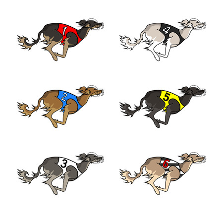 borzoi: Vector set of running dog saluki breed, in dog racing or coursing dress