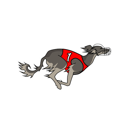 borzoi: Vector image of running dog saluki breed, in dog racing or coursing dress number one