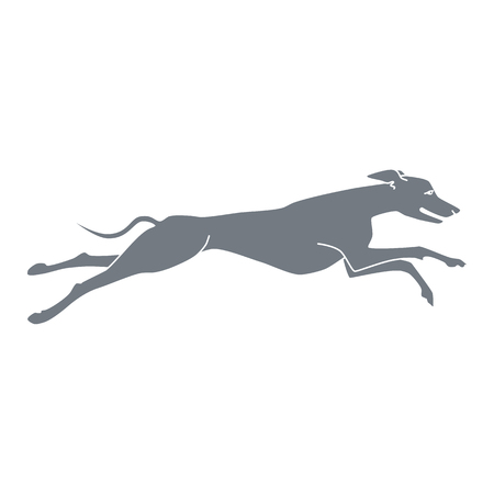 greyhound: Vector silhouette of running dog whippet breed