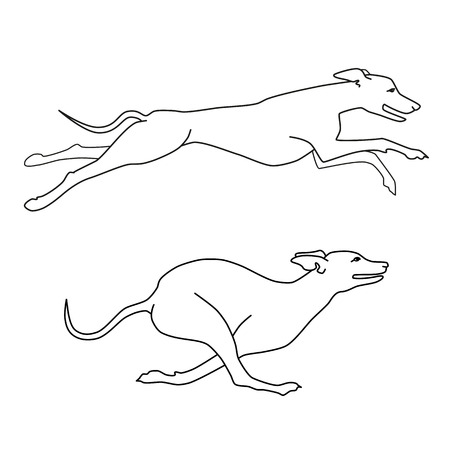 borzoi: Contour vector image of running dogs whippet breed, two poses Illustration